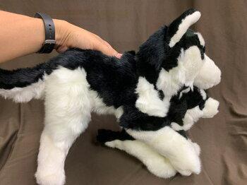 シベリアンハスキーぬいぐるみ這37cmハーネス付き犬おもちゃ