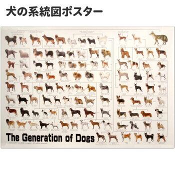 犬・ポスター・歴史・ドッグジェネレーション・犬の系統図・A3・血統・ブリーディング