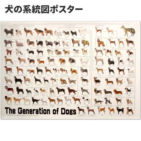 犬の歴史が一目了然!ドッグジェネレーション・ポスター【犬の系統図】