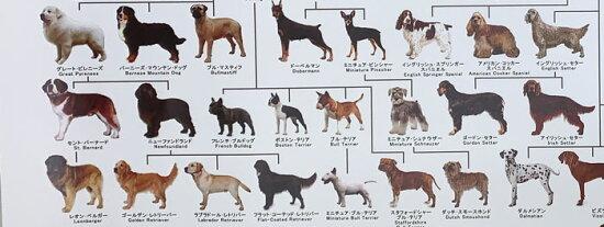 犬の系統図ドッグジェネレーションポスター犬の歴史がわかる【人気商品】【02P27Jan14】