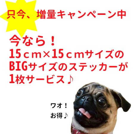 名前入り犬ステッカーセットちょい悪プレゼント付きギフトプレゼント只今,増量キャンペーン中。今なら15cmX15cmサイズのBIGサイズステッカー1枚サービス♪犬屋いぬや
