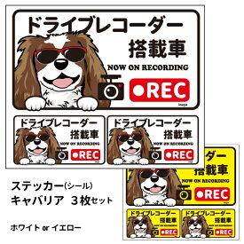 グラサン ドライブレコーダー ステッカー キャバリア(茶白) 長方形 3枚入1セット 大15cm 小6.5cm シール 犬屋 オリジナル 犬 ドッグ ドラレコ