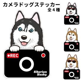 シベリアンハスキー ステッカー カメラドッグ 犬 犬屋 いぬや ドライブレコーダー 可愛い かわいい 車用 ドラレコ あおり運転 防止 窓 録画 おでかけ 送料無料