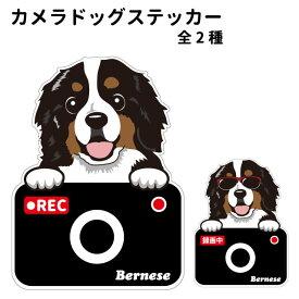 バーニーズ ステッカー カメラドッグ 犬 犬屋 いぬや ドライブレコーダー 可愛い かわいい 車用 ドラレコ あおり運転 防止 窓 録画 おでかけ 送料無料