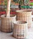 ラタン鉢カバー B1252観葉植物 モダン ナチュラル インテリアグリーン   おしゃれ 人気 引越し祝い 開店祝い 新築祝い 結婚祝い お祝い 観葉植物通販