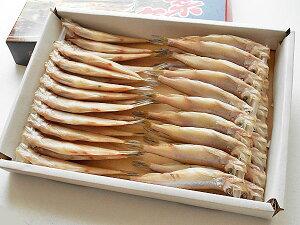 北海道産シシャモ メス40尾送料無料 ししゃも一夜干