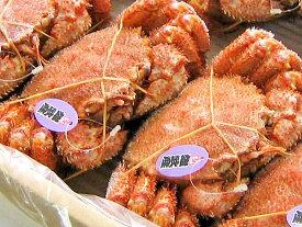 毛ガニ(約500g)×2尾送料無料北海道雄武、枝幸産毛がに