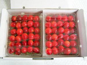 さくらんぼ 佐藤錦(L)2kg(500g×4)送料無料 北海道産桜桃「YES!clean」表示農産物(減農薬・減化学肥料栽培)生産元直送 出荷期間:7月中旬