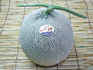 【送料無料】北海道産・富良野メロン 1.5〜1.6kg×1玉ちょっと訳あり7月上旬発送開始