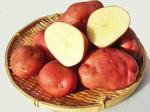 じゃがいも あかね風 (M〜L混)10Kg送料無料 北海道産 ジャガイモ生産元直送 同梱不可 9月中旬発送開始