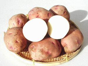 じゃがいも べにあかり (M〜L混)10Kg送料無料 北海道産 ジャガイモ生産元直送 同梱不可 9月中旬発送開始