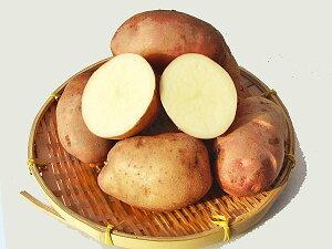 じゃがいも 紅丸 (M〜L混)5Kg送料無料 北海道産 ジャガイモ生産元直送 同梱不可 9月中旬発送開始