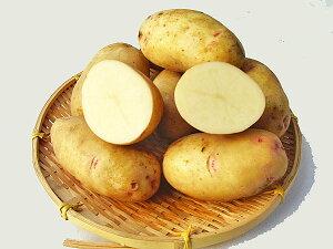 じゃがいも はるか (M〜L混)10Kg送料無料 北海道産 ジャガイモ生産元直送 同梱不可 9月中旬発送開始
