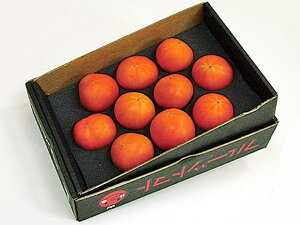 北海道下川町産フルーツトマト(800g・A品)×2箱(1箱あたり8〜15玉程度)7月上旬発送開始