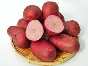 じゃがいも ドラゴンレッド (M〜L混)5Kg送料無料 北海道産 ジャガイモ生産元直送 同梱不可 9月中旬発送開始
