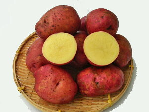 じゃがいも ジャガキッズレッド (M〜L混)10Kg送料無料 北海道産 ジャガイモ生産元直送 同梱不可 9月中旬発送開始