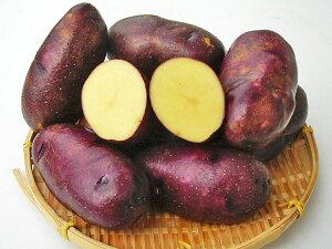 じゃがいも タワラマゼラン (M〜L混)10Kg送料無料 北海道産 ジャガイモ生産元直送 同梱不可 9月中旬発送開始