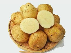 じゃがいも きたひめ (M〜L混)10Kg送料無料 北海道産 ジャガイモ生産元直送 同梱不可 9月中旬発送開始