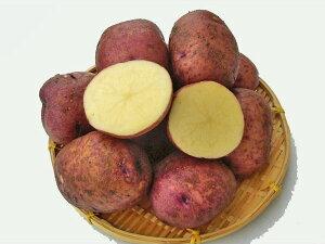 じゃがいも サユミムラサキ (M〜L混)10Kg送料無料 北海道産 ジャガイモ生産元直送 同梱不可 9月中旬発送開始