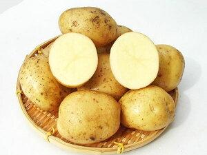 じゃがいも タワラワイス (M〜L混)10Kg送料無料 北海道産 ジャガイモ生産元直送 同梱不可 9月中旬発送開始