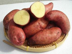 じゃがいも 徳重ヨーデルワイス (M〜L混)10Kg送料無料 北海道産 ジャガイモ生産元直送 同梱不可 9月中旬発送開始