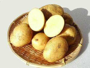 じゃがいも ながさき黄金 (M〜L混)10Kg送料無料 北海道産 ジャガイモ生産元直送 同梱不可 9月中旬発送開始