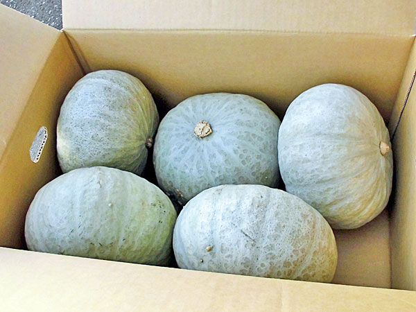 【送料無料】【10月上旬〜12月中旬 なくなり次第終了】北海道産 雪化粧かぼちゃ10kg(4〜6玉)×1箱【常温便】