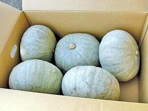 雪化粧かぼちゃ 10kg(4〜7玉)×1箱送料無料 北海道産 南瓜出荷時期:10〜1月 生産元直送
