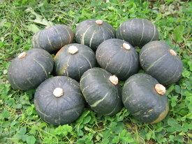 坊っちゃんかぼちゃ(300〜400g)×10個北海道産 南瓜 9月上旬発送開始!送料無料