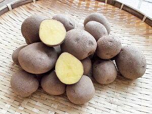 じゃがいも 紫月 (しづき M〜L混) 10Kg送料無料 北海道産 ジャガイモ生産元直送 同梱不可 9月中旬発送開始