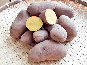 じゃがいも タワラヨーデル (M〜L混) 10Kg送料無料 北海道産 ジャガイモ生産元直送 同梱不可 9月中旬発送開始