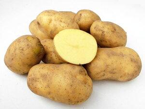 じゃがいも コロール (M〜L混) 10Kg送料無料 北海道産 ジャガイモ生産元直送 同梱不可 9月中旬発送開始