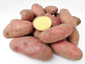 じゃがいも シェリー (M〜L混) 10Kg送料無料 北海道産 ジャガイモ生産元直送 同梱不可 9月中旬発送開始