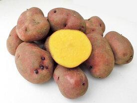 じゃがいも インカルージュ (M〜L混) 10Kg送料無料 北海道産 ジャガイモ生産元直送 同梱不可 9月中旬発送開始