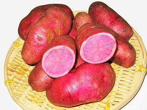 じゃがいも ノーザンルビー (M〜L混) 10Kg送料無料 北海道産 ジャガイモ生産元直送 同梱不可 9月中旬発送開始