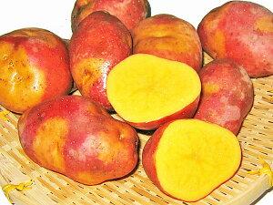 じゃがいも インカのひとみ (M〜L混) 10Kg送料無料 北海道産 ジャガイモ生産元直送 同梱不可 9月中旬発送開始