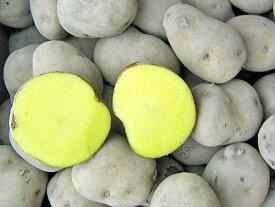 じゃがいも インカのめざめ (M〜L混)5Kg送料無料 北海道産 ジャガイモ生産元直送 同梱不可 9月中旬発送開始