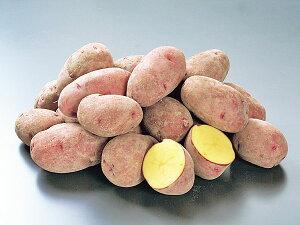 じゃがいも レッドムーン (M〜L混) 10Kg送料無料 北海道産 ジャガイモ生産元直送 同梱不可 9月中旬発送開始