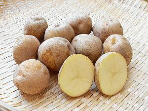 じゃがいも スノーデン (M〜L混) 10Kg送料無料 北海道産 ジャガイモ生産元直送 同梱不可 9月中旬発送開始