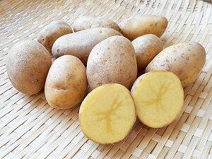 じゃがいも ピルカ (M〜L混) 10Kg送料無料 北海道産 ジャガイモ生産元直送 同梱不可 9月中旬発送開始