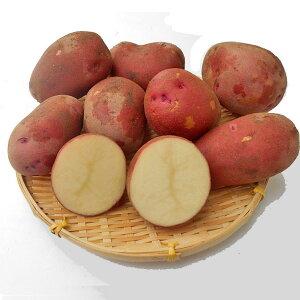 じゃがいも レッドカリスマ (M〜L混)10Kg送料無料 北海道産 ジャガイモ生産元直送 同梱不可 9月中旬発送開始