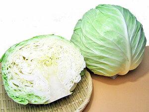 【送料無料】【期間限定 12月〜3月】味見したい方におすすめ!北海道の越冬キャベツ2玉(総量約3kg程度)