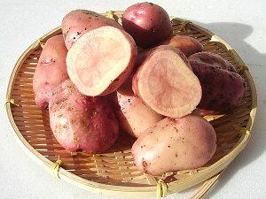 じゃがいも インカレッド (M〜L混)5Kg送料無料 北海道産 ジャガイモ生産元直送 同梱不可出荷時期 10〜4月