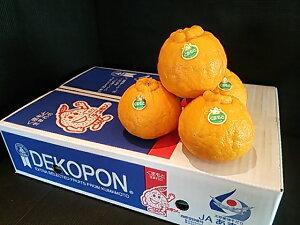 送料無料 ご贈答 お年賀 お歳暮 フルーツ 熊本県産 デコポン 12玉入 約5kg