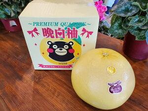 送料無料 ご贈答 お年賀 お歳暮 フルーツ 熊本県八代産 特選 晩白柚 2Lサイズ1玉入り(2kg以上)