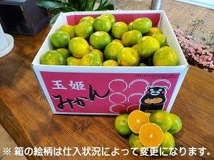 秋の味覚 熊本県産 極早生みかん 内容量 Mサイズ 10kg箱