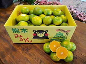 秋の味覚 熊本県産 極早生みかん 内容量 Mサイズ 約5kg箱