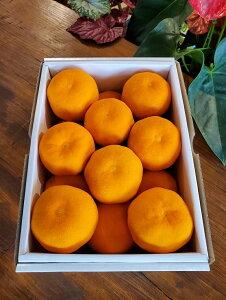 お中元 贈答用 フルーツ 熊本県産ハウスみかんM・Sサイズ(約1.5kg15玉〜22玉入り)