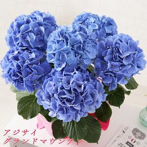 花母の日母日ははのひギフトプレゼントお祝い贈り物高松商事、竹中庭園緑化【母の日ギフト】鉢花・花束