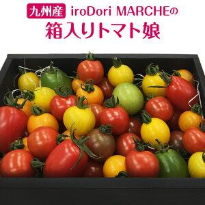九州産 iroDori MARCHEの箱入りトマト娘 800g カラフルトマト 産地直送